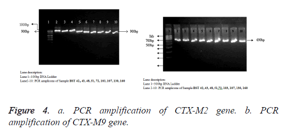biomedres-PCR-amplification