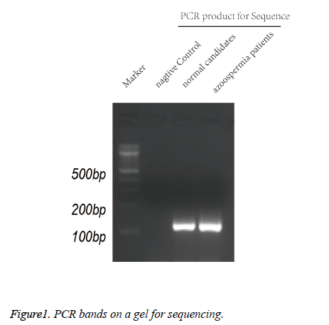 biomedres-PCR-bands-gel