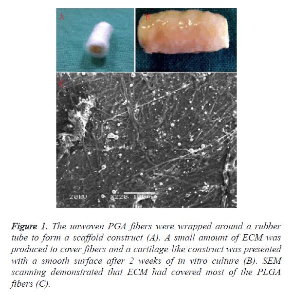 biomedres-PGA-fibers