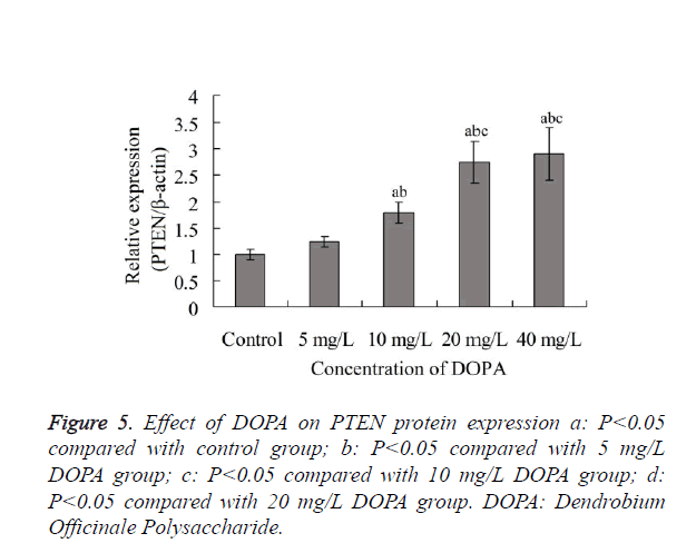 biomedres-PTEN-protein