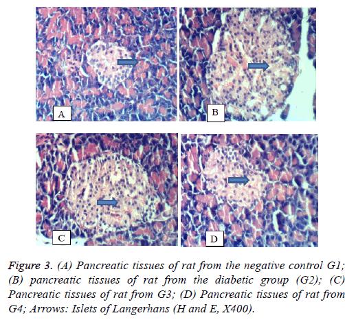 biomedres-Pancreatic-tissues