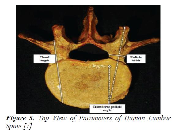 biomedres-Parameters-Human-Lumbar