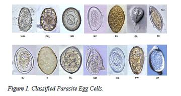 biomedres-Parasite-Egg