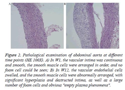 biomedres-Pathological-examination