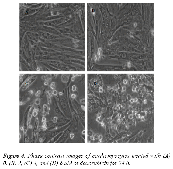 biomedres-Phase-contrast-images