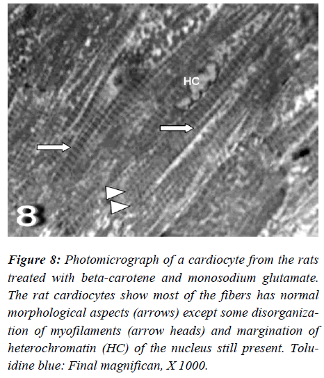 biomedres-Photomicrograph-monosodium-glutamate