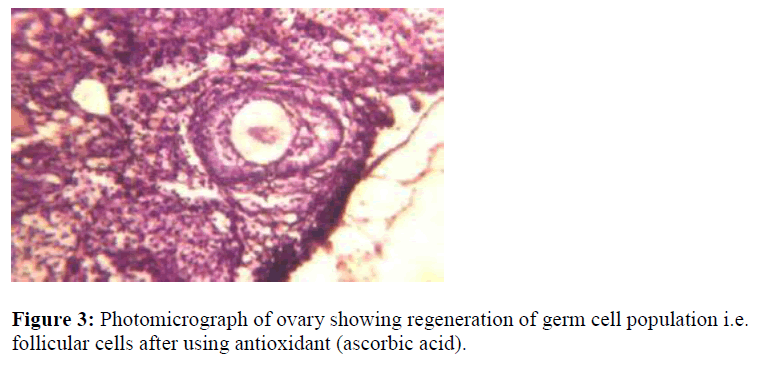 biomedres-Photomicrograph-ovary-regeneration-germ-cell