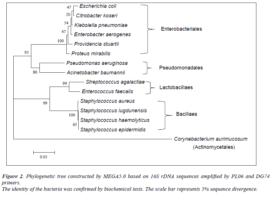 biomedres-Phylogenetic-sequences-bacteria-biochemical