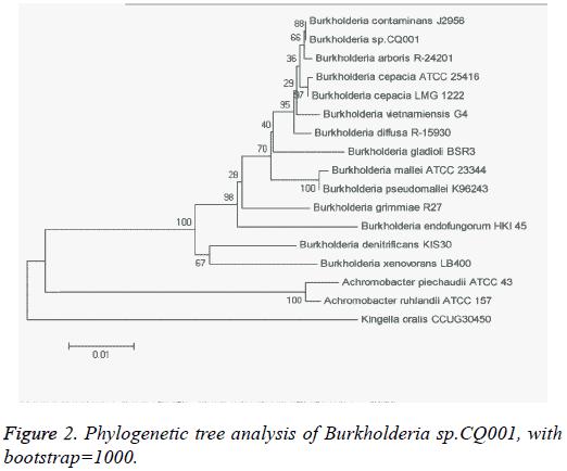biomedres-Phylogenetic-tree-analysis