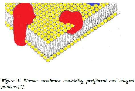 biomedres-Plasma-membrane