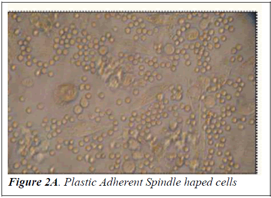 biomedres-Plastic-Adherent