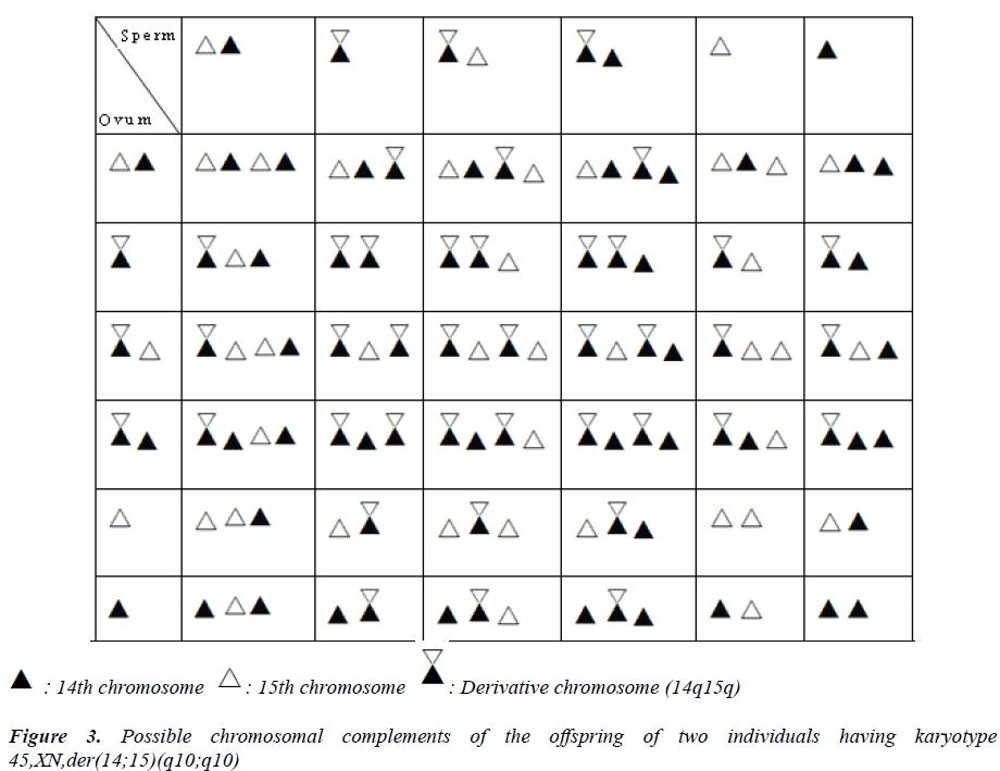 biomedres-Possible-chromosomal