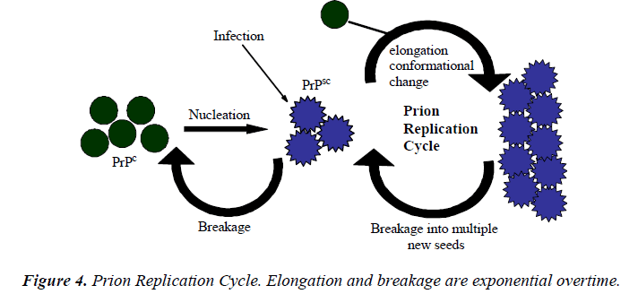 biomedres-Prion-Replication-Cycle