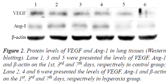 biomedres-Protein-levels-VEGF