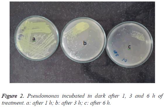 biomedres-Pseudomonas-incubated-dark