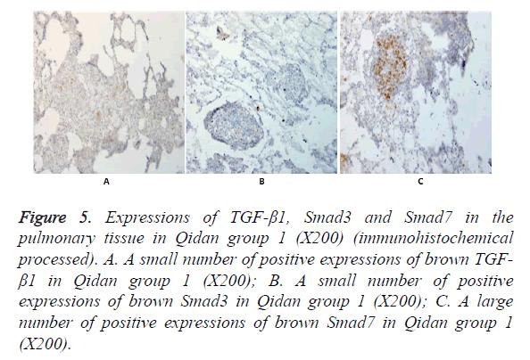 biomedres-Qidan-group