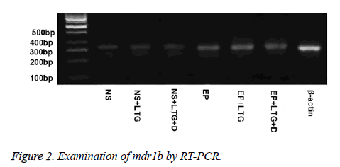 biomedres-RT-PCR