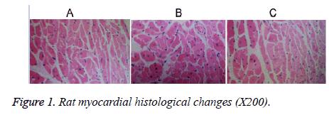 biomedres-Rat-myocardial