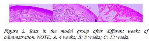 biomedres-Rats-model