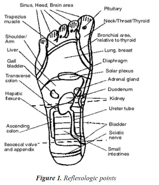 biomedres-Reflexologic-points