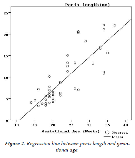 biomedres-Regression-line-penis-length