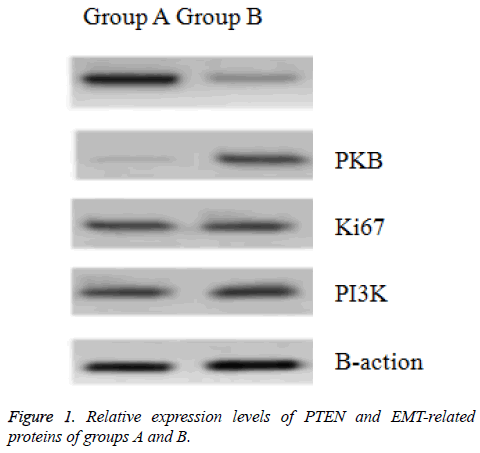 biomedres-Relative-expression
