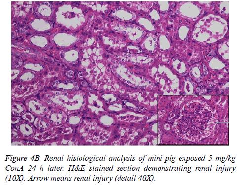 biomedres-Renal-histological