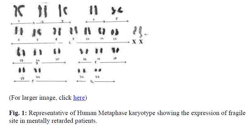biomedres-Representative-Human