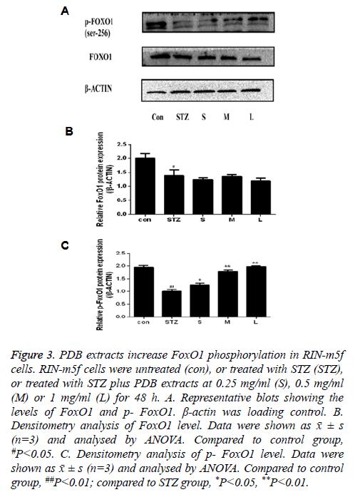 biomedres-Representative-blots