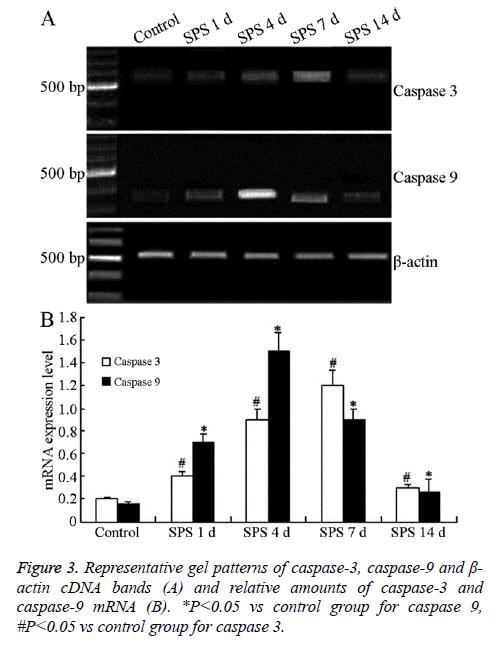 biomedres-Representative-gel-patterns