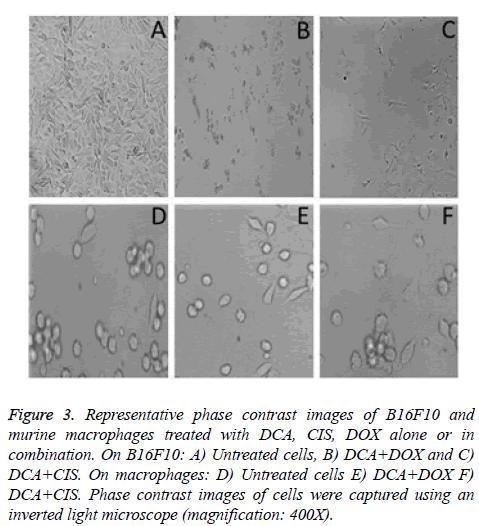 biomedres-Representative-phase