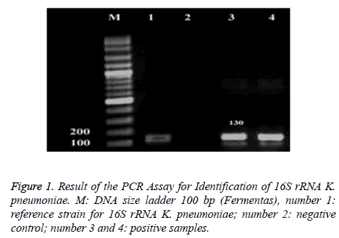 biomedres-Result-PCR