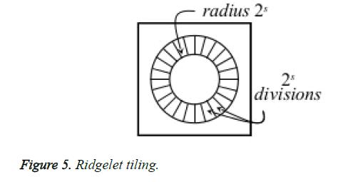 biomedres-Ridgelet-tiling