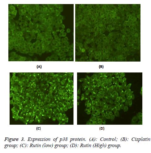 biomedres-Rutin-group