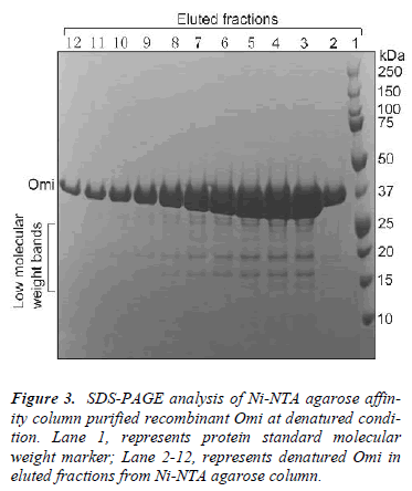 biomedres-SDS-PAGE-Ni-NTA-agarose