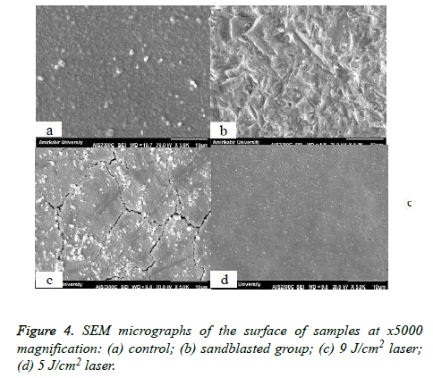 biomedres-SEM-micrographs