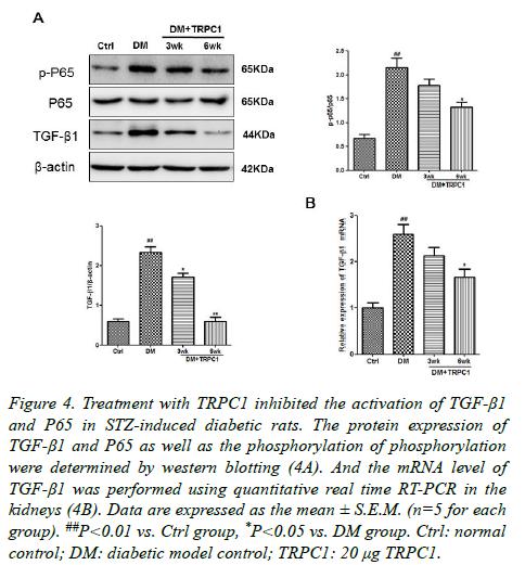 biomedres-STZ-induced-diabetic-rats
