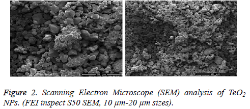 biomedres-Scanning-Electron