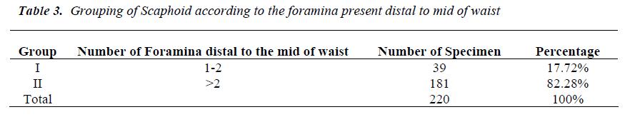 biomedres-Scaphoid-according-foramina-present