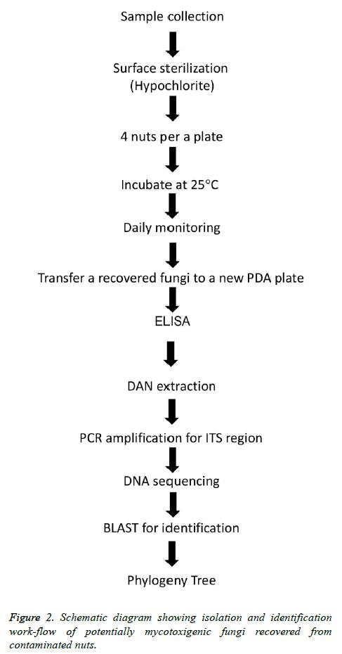 biomedres-Schematic-diagram