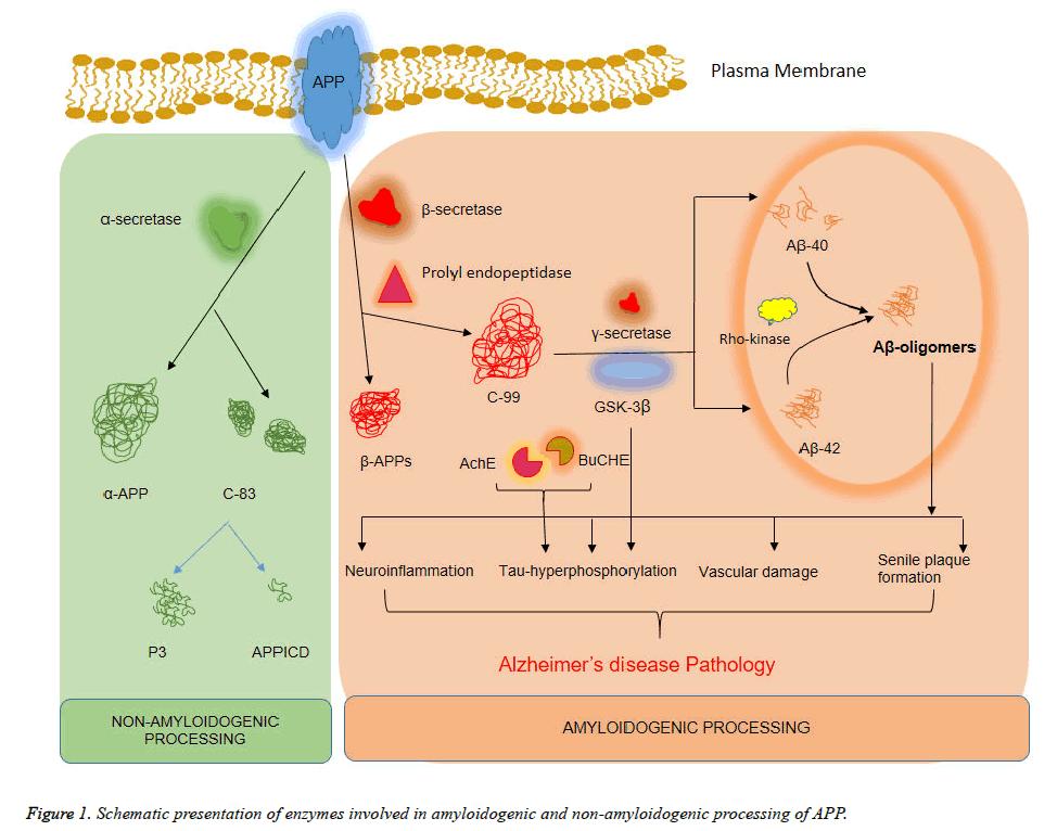 biomedres-Schematic-presentation