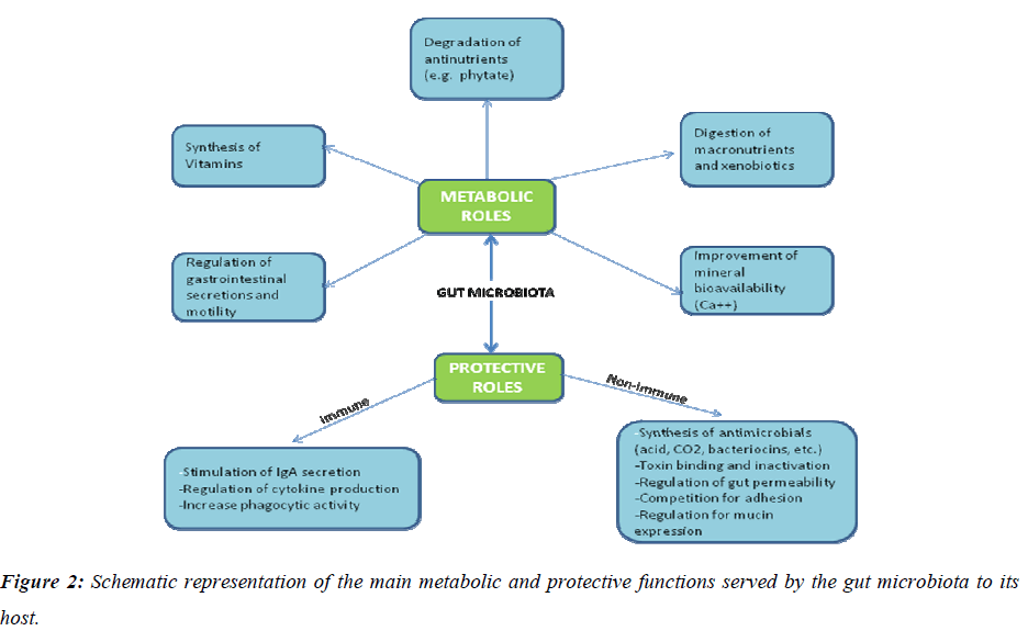 biomedres-Schematic-representation