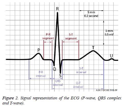biomedres-Signal-representation