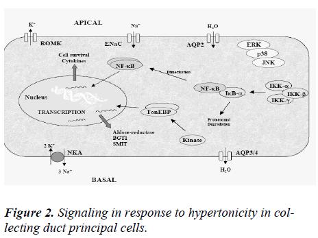 biomedres-Signaling-response