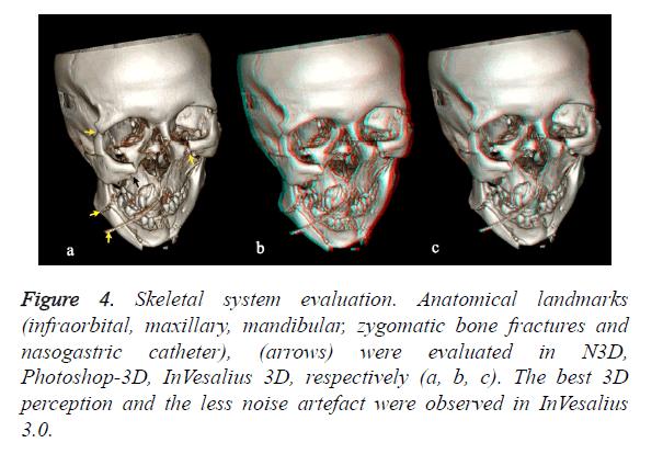 biomedres-Skeletal-system