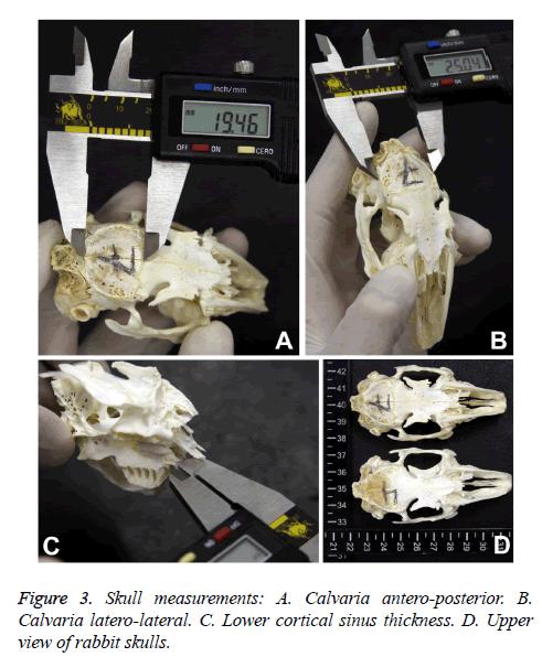 biomedres-Skull-measurements