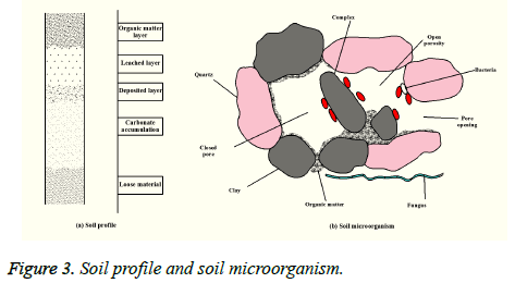 biomedres-Soil-profile