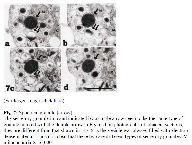 biomedres-Spherical-granule
