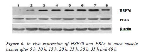 biomedres-Splenocyte-flow-cytometry