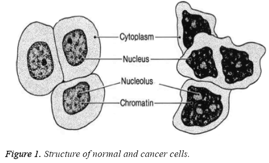 biomedres-Structure-normal-cancer